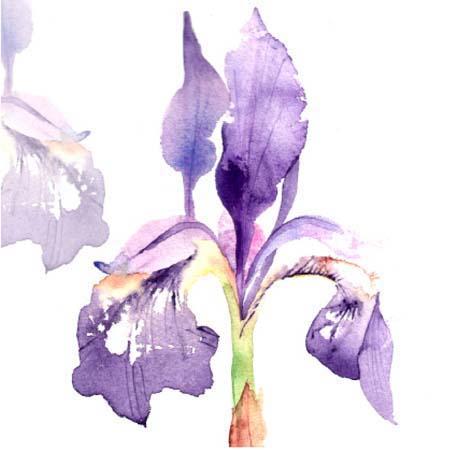 card Iris