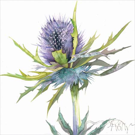 thumb-sea holly