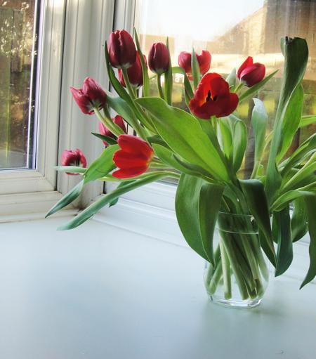 tulips5-72