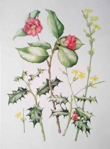 06-04-15 Mehigan Camellia72