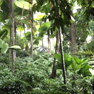 Jungle foliage in the Singapore Orchid Garden
