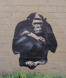 01-06-15 baboon2