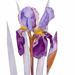 Alcazar iris - final painting