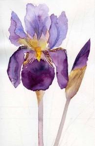 02-06-15 Alcazar iris1-72
