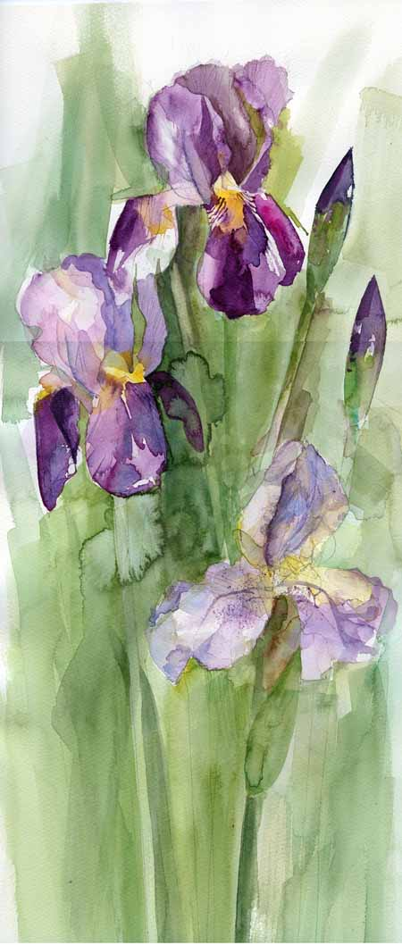Irises, painterly sketch