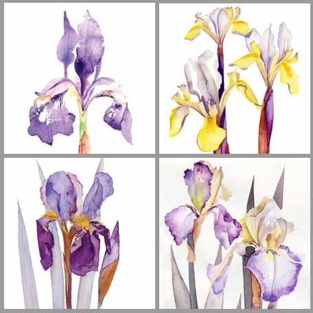 18-06-15 iris cards