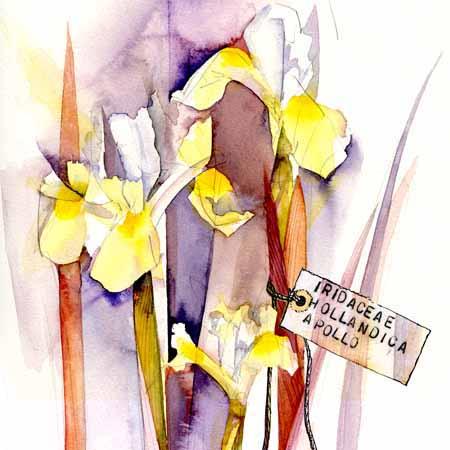02-08-15 Iris card