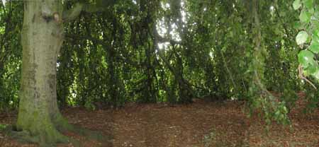 6 photos joined to show the inside of the tree canopy