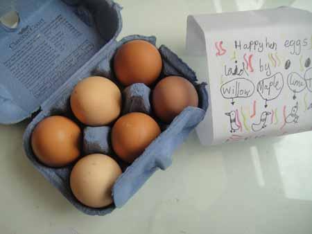 11-10-15 egg farming2-72