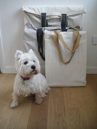 Islay the Westie with my art bags
