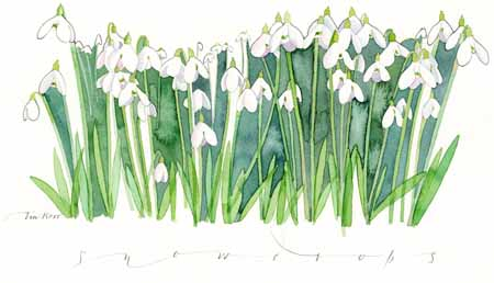 Snowdrops - watercolour