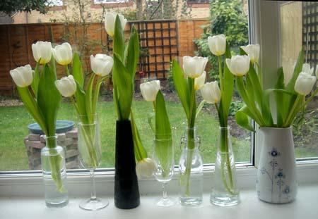 18-03-16 tulips2-72