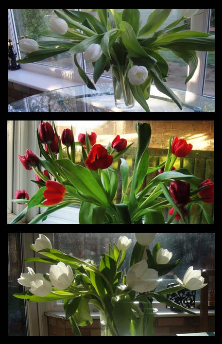 tulips collage2-72
