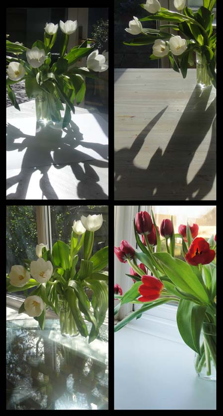 tulips collage72