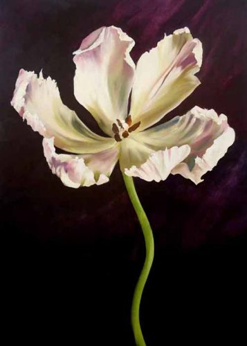 Open Parrot Tulip 70cm x 50cm, oils on birch panel