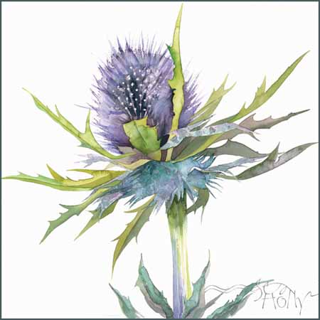 Sea Holly - watercolour 40cm x 40cm