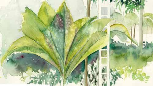 lin-botanical-gardens72